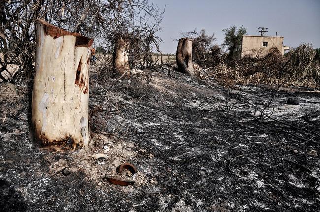قطع درختان در حواشی کرخه/ریه های شوش و دزفول در خطر هستند