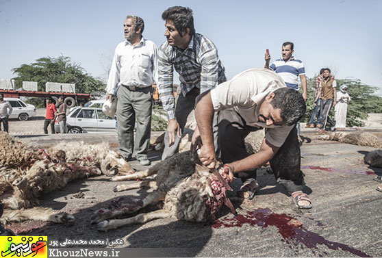 تصادف کامیون با گله گوسفندان در جاده اهواز - شاوور