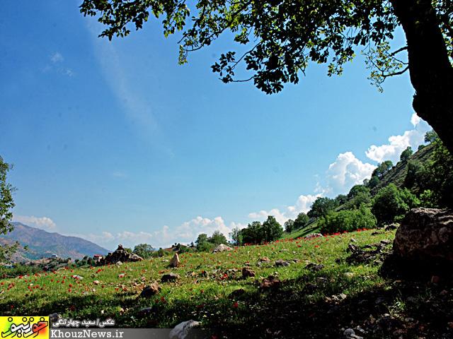 طبیعت منطقهی شالو - ایذه در حاشیه دریاچه سد کارون 3