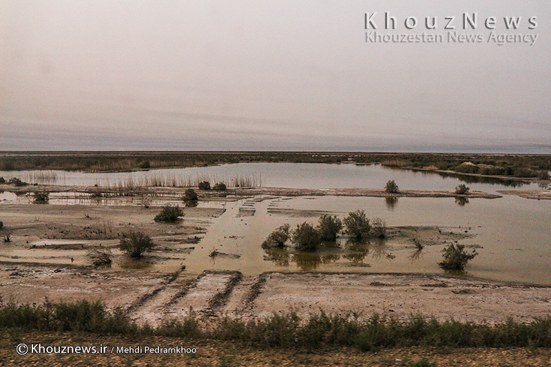 تنها امید مردم خوزستان در برابر ریزگردها در یک قدمی نابودی