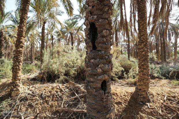 شوری بیش از حد آب آبادان و خرمشهر/ مردم با مشکل مواجهند