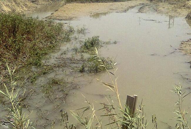 مرگ گاومیشها در نهر