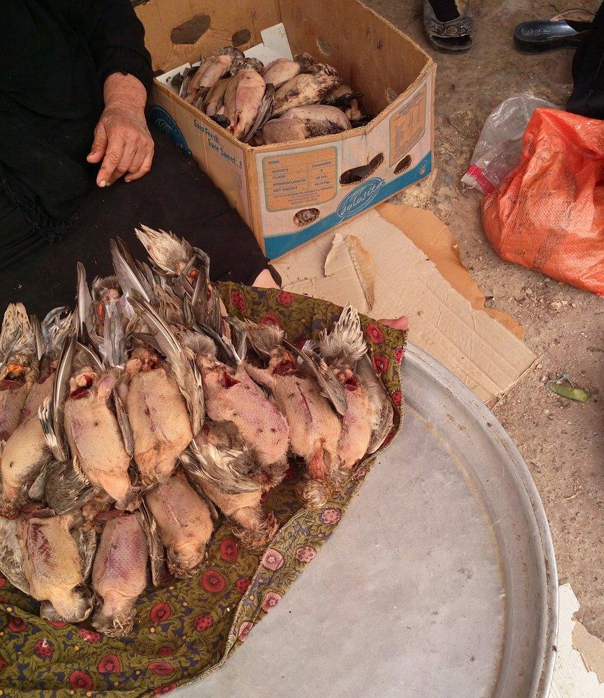 سفره خونین تالابهای خوزستان پیش پای پرندگان مهاجر
