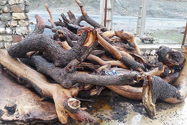 عکس/ قطع گسترده درختان بلوط در منطقه حفاظت شده شیمبار شهرستان اندیکا