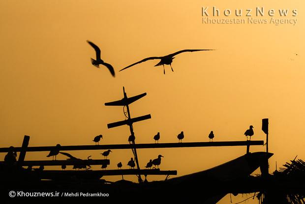 تک عکس / اسکله آبادان