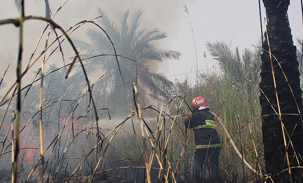 تصاویر / آتش در نخلستان مقیطیعه آبادان