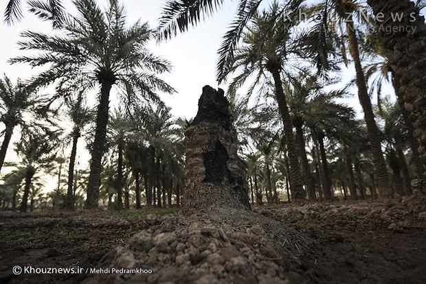 تصاویر / بازدید وزیر جهاد کشاورزی از طرح 550 هزار هکتاری