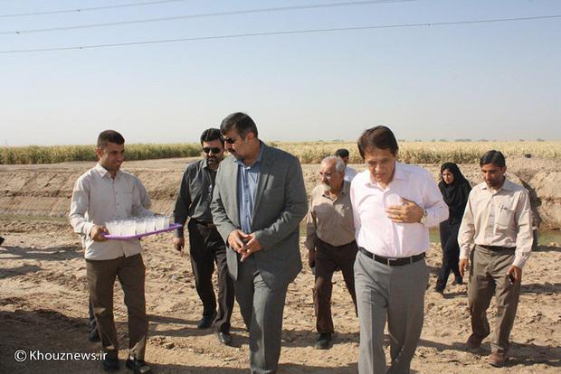 خشک شدن مزارع نیشکر به دلیل بی آبی/ تصاویر