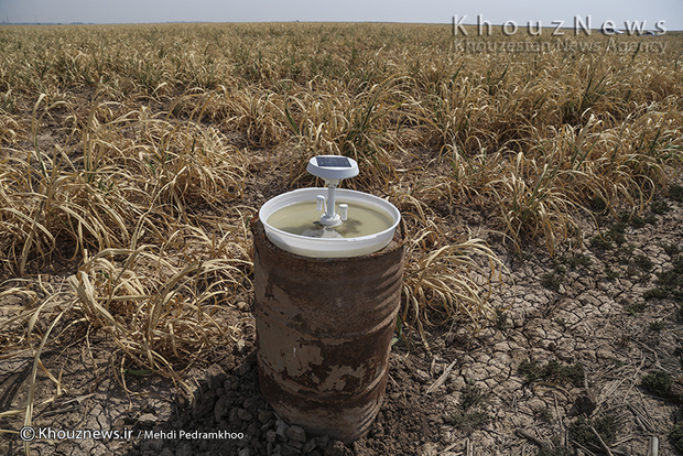 تصاویر / خسارت ۷۰ درصدی به مزارع نیشکر به دلیل بی آبی