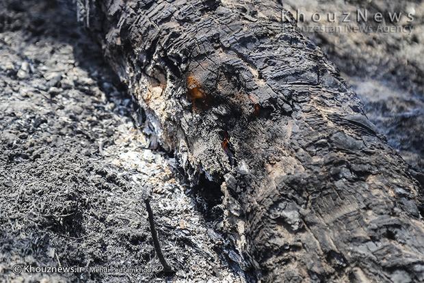 تصاویر / خاکستر شدن 600 نخل در خنافره شادگان