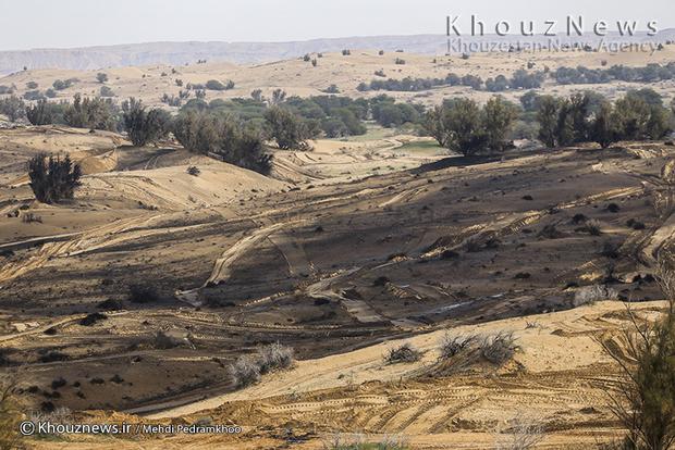 تصاویر / مالچ پاشی در منطقه محافظت شده میشداغ