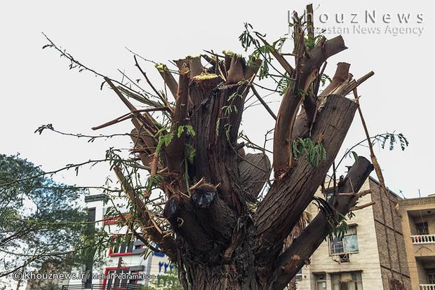تصاویر / هرس غیر اصولی درختان اهواز