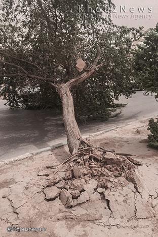 تصاویر/  طوفان گرد و خاک در اهواز  درختان را از ریشه درآورد