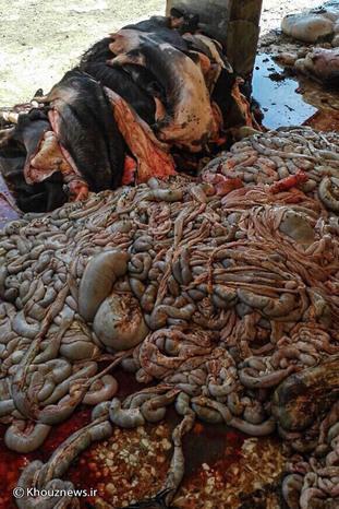 تصاویر/ گوشتی که مردم اهواز می خورند از کجا می آید؟!